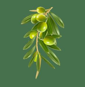 Olive Italiane Biologiche Ruscigno