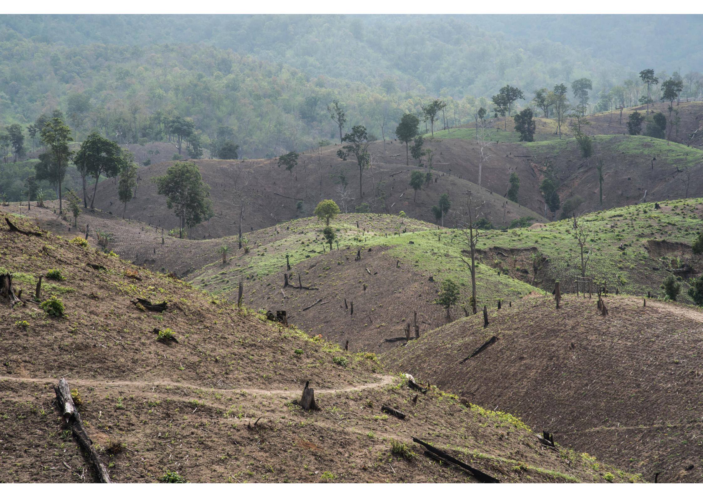 foto deforestazione blog